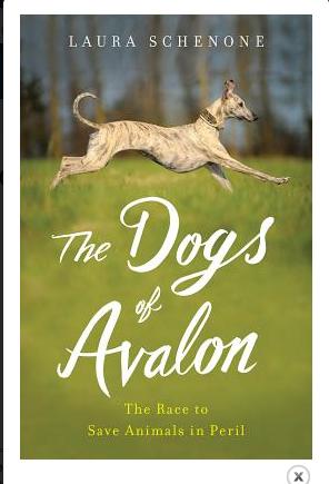 Dogs of Avalon